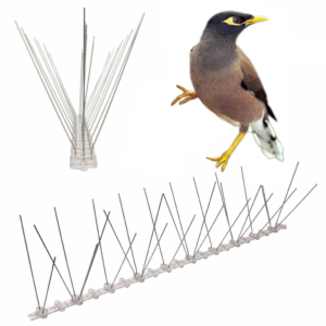 bird spikes for indian myna